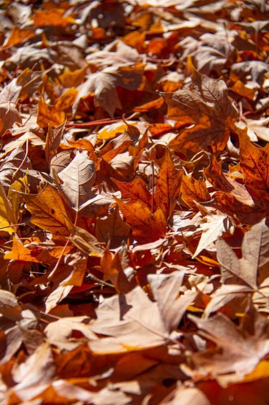 Leaf Peeping Coolidge Park18