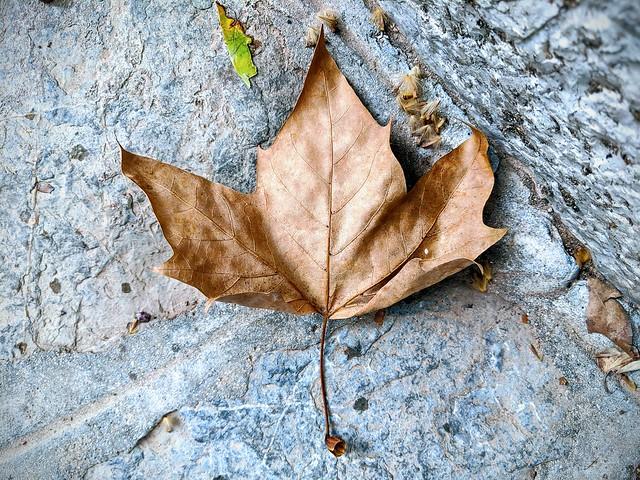 La mateixa foto però retocada d'una altra forma. La tardor ja és arribada. #tardor #autumn #natura #nature #googlepixel2xl #pixel2xl #Mallorca #winteriscoming