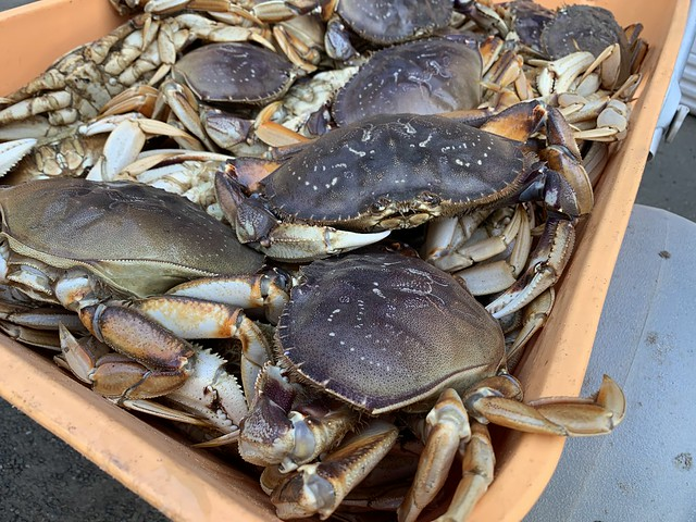Sunday haul of crab