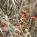 Red Orange Flora
