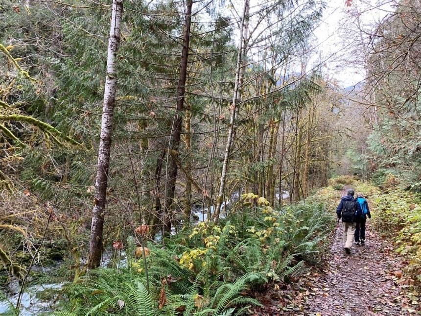 20191111_Dosewallips Road Trail_Karen Holtrop03