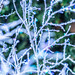 Crystallized Branches
