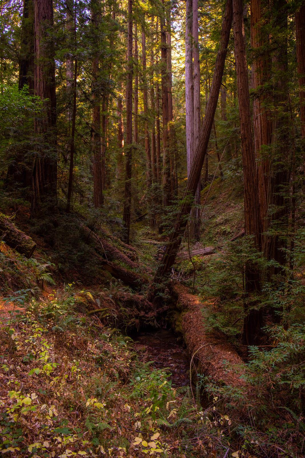11.09. Portola Redwoods State Park
