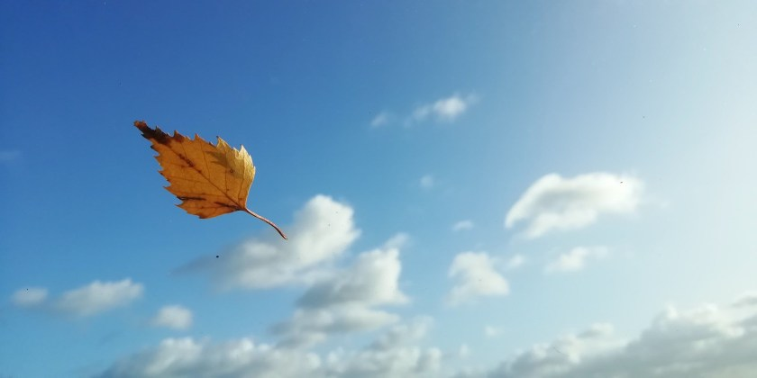 A leaf, blueskies and clouds