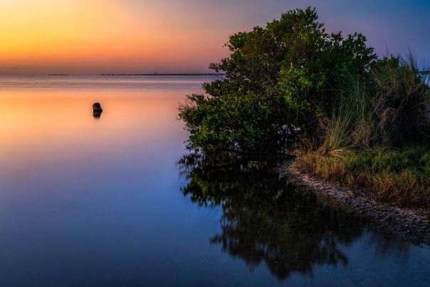 Mangrove Mirror 3