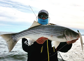 Photo of man holding a large striped bass