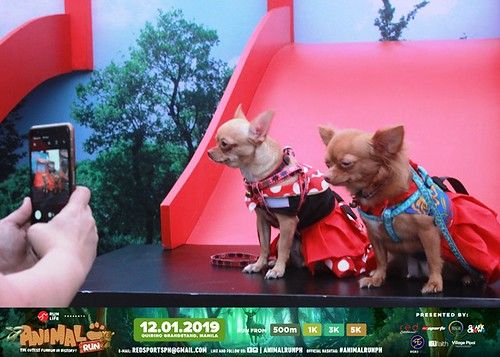 Purina Animal Run 2019 Dog Photobooth