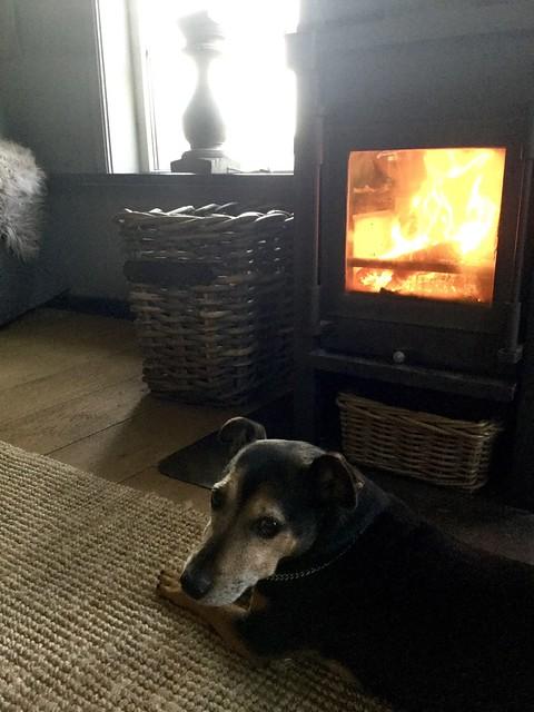 Hond voor houtkachel Hoffz mand met hout