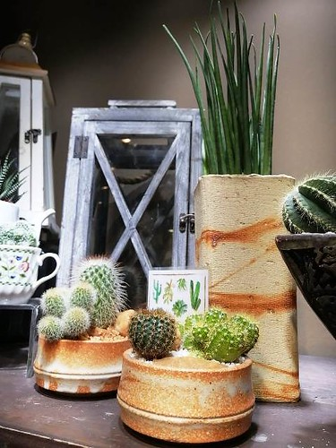 Get started on a new hobby with the terrarium bar at Gourdo's (1)