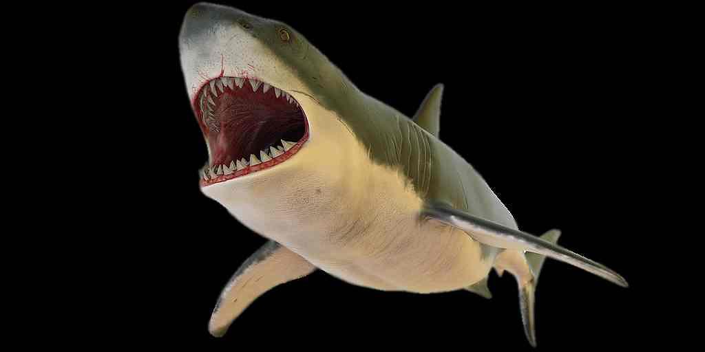un-requin-ancien-utilisait-ses-dents-comme-la-lame-des-outils-électriques