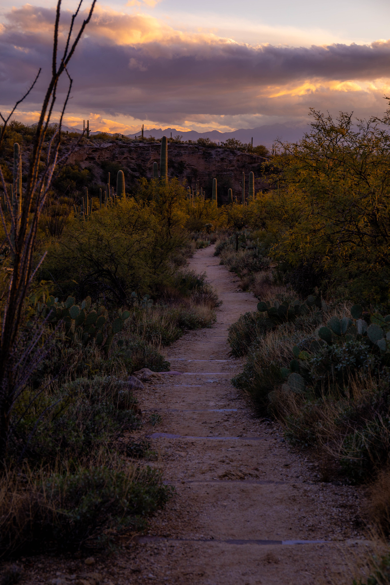 12.25. Saguaro National Park