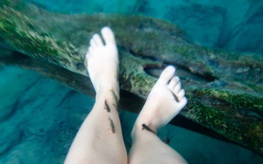 An underwater photo of my feet, with 5 small fish nibbling on the dead skin.