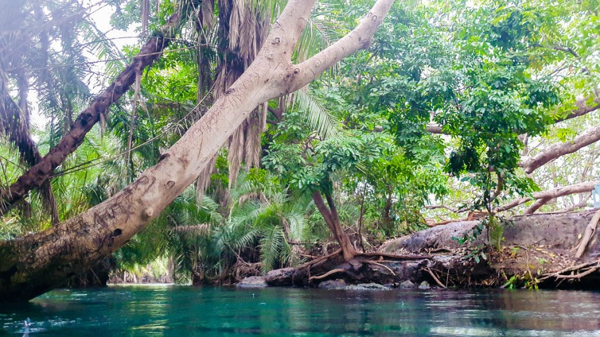 A large branch of a tree leaning over the turqoise colored water, at a 45 degrees angle