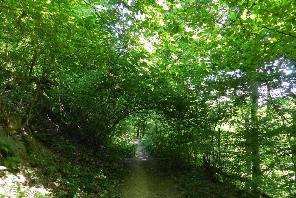 sendero Johannisberg a Kiedrich Valle del Rin Alemania 03