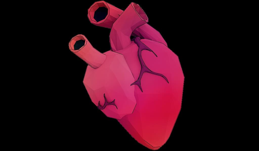un-coeur-artificiel-pour-tester-des-valves-et-des-dispositifs-cardiaques
