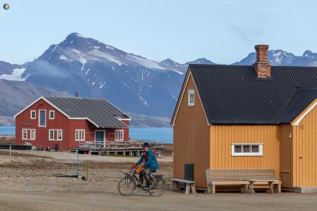 A true inhabitant of Ny-Ålesund