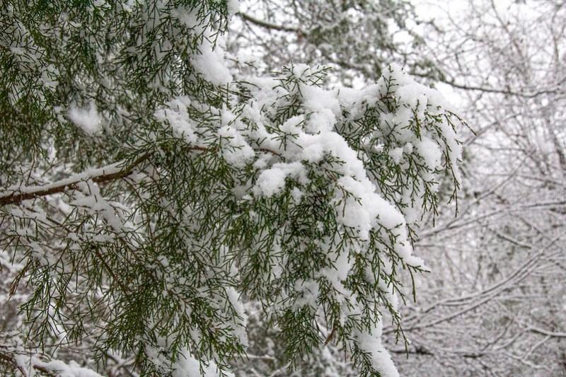 Snow Day7