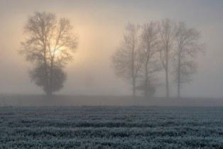 *Morning magic on the railway embankment*