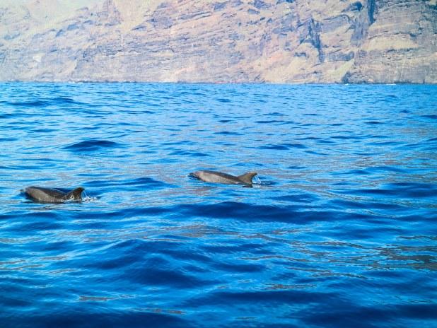 Observacion de cetaceos en Tenerife