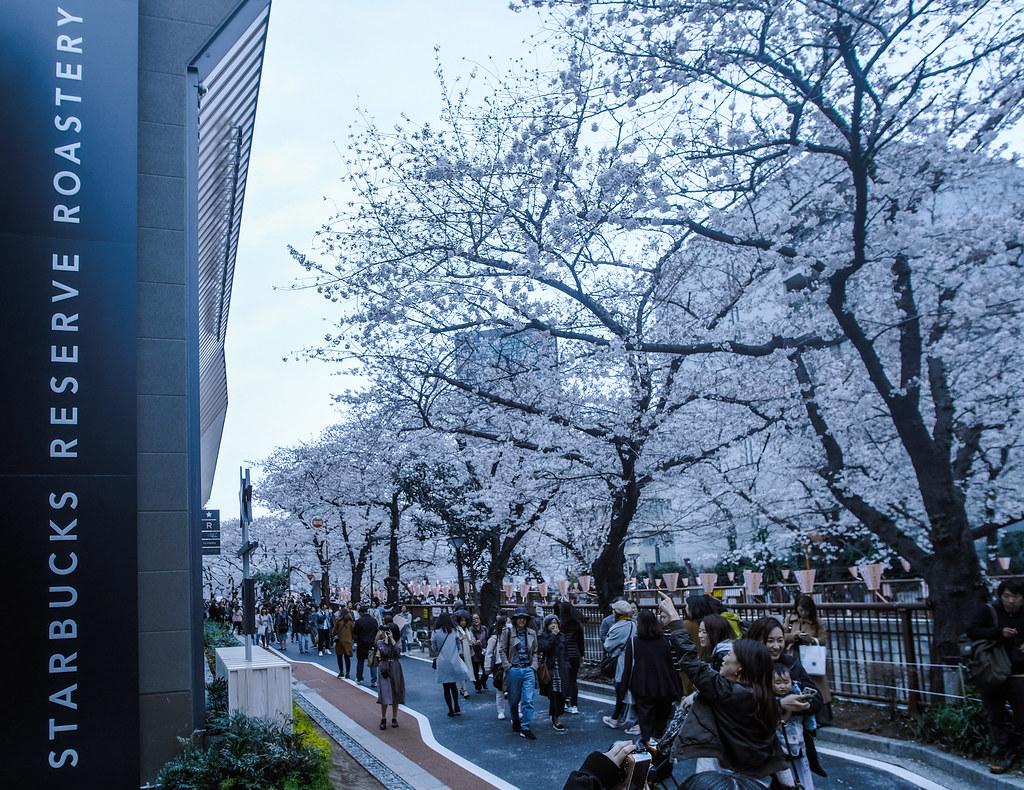 Cherry Blossom at Meguro River