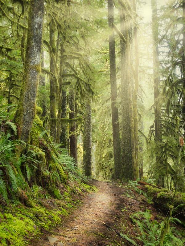 Butte Creek Trail
