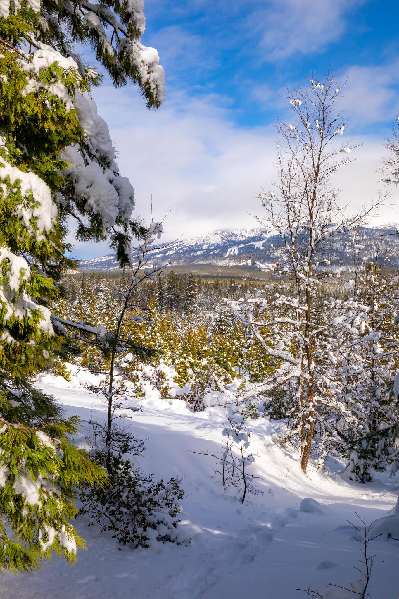 01.18. Snowshoeing Mt Shasta