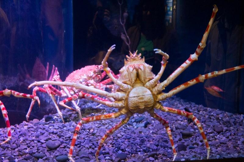 Tennessee Aquarium69