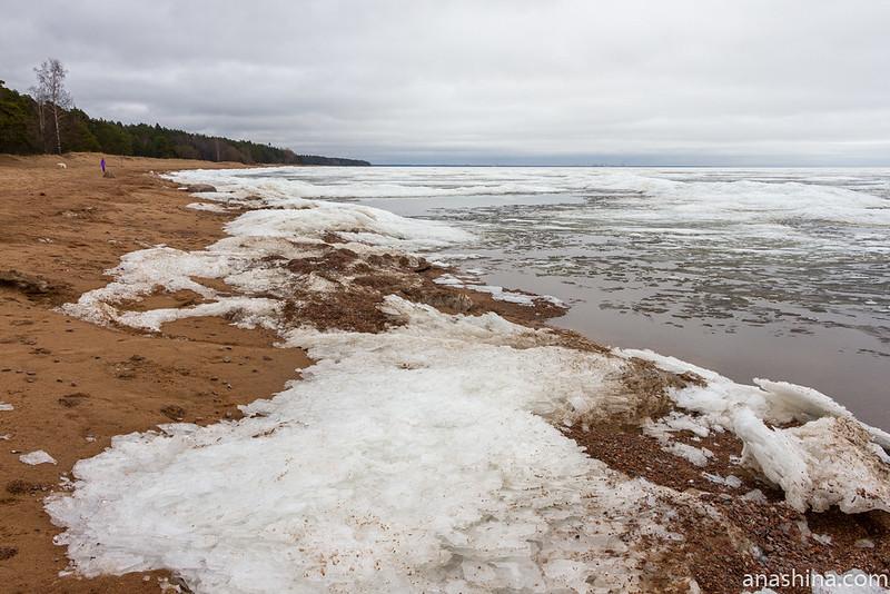Финский залив, Комарово, зима, Санкт-Петербург, природа
