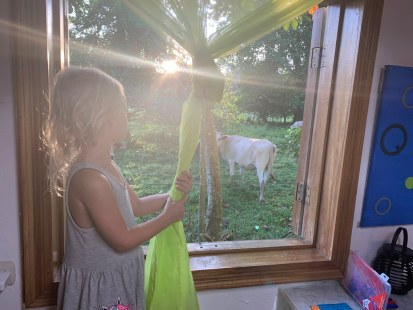 Waking up with the sun and cows in our garden