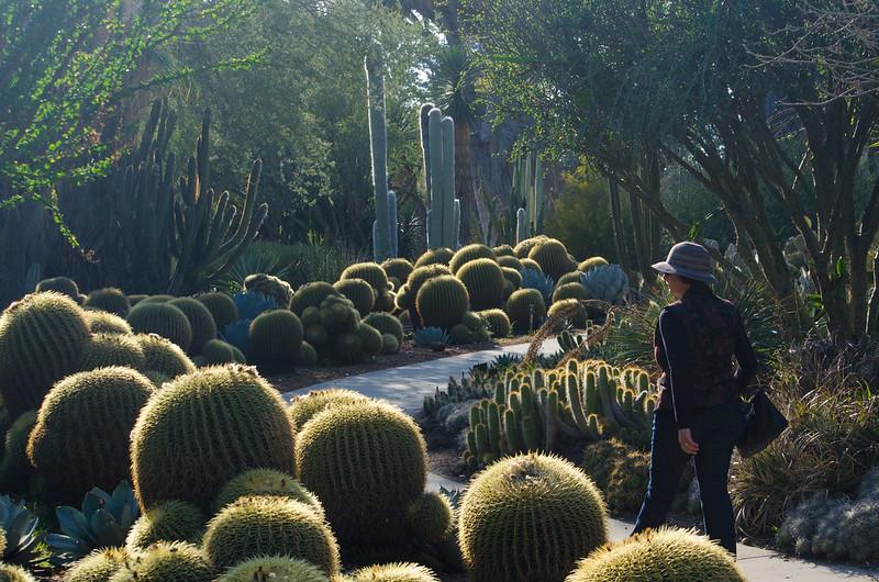 The cacti walk