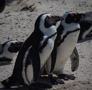 Penguins on patrol