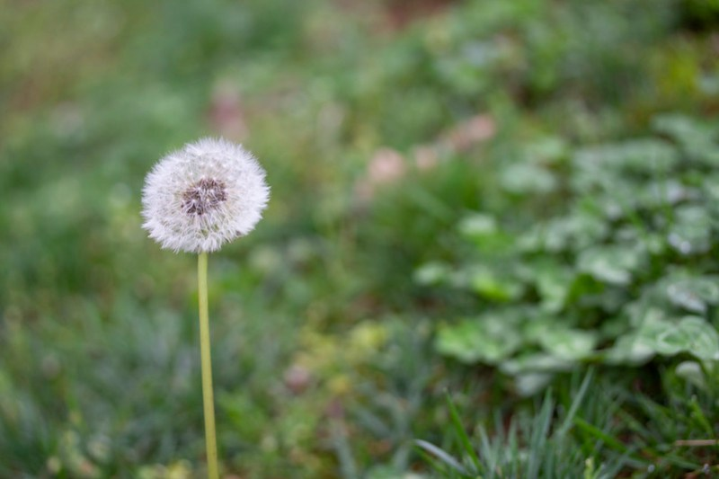 Social Distancing Nature Walk1