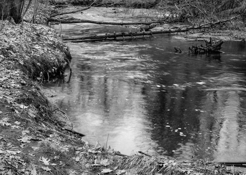 Creek Bank, Saratoga Spa State Park.