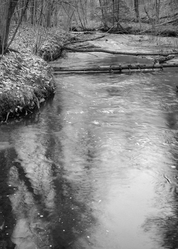 Geyser Creek Fallen Trees and Shadows, late winter flow