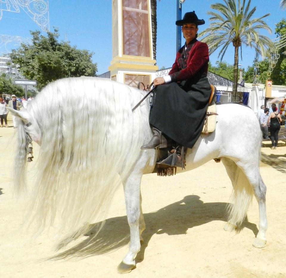 desfile caballo blanco y jinete Parque González Hontoria Feria del Caballo 2014 Jerez de la Frontera Cadiz 01