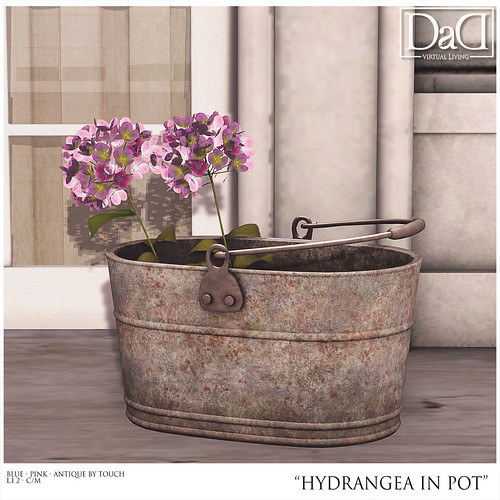 Hydrangea in Pot GROUP GIFT