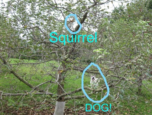 lili squirrel_LI (3)