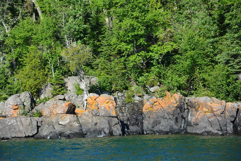 Witch tree on rocks