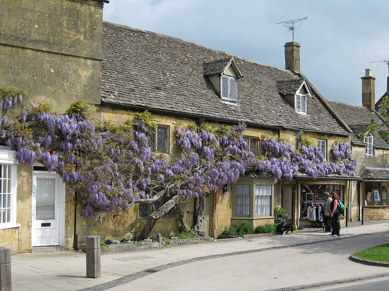IMG_3010 Broadway Cotswolds Wisteria