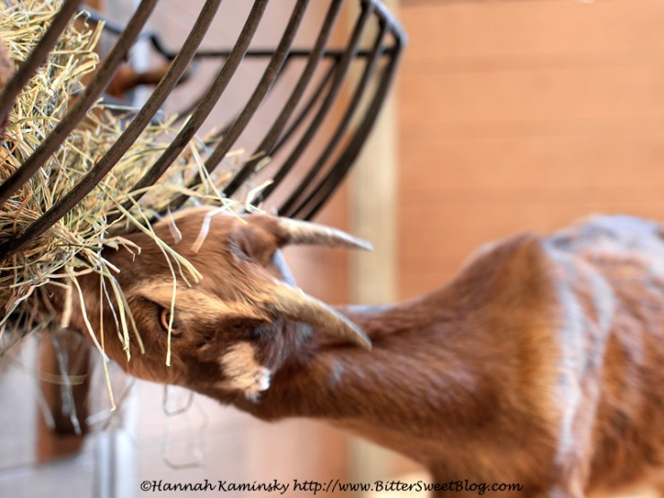 [Almost] Wordless Wednesday: Bet the Ranch
