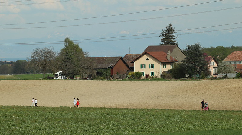 Three groups of people walk along an agricultural road in between Eysins and Mies.