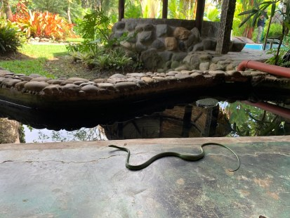 Snake crawling through your co-working space #junglelife