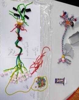 Ateliers Bonbons Neurones Périscolaire