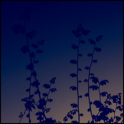 IMG_0210-Edit