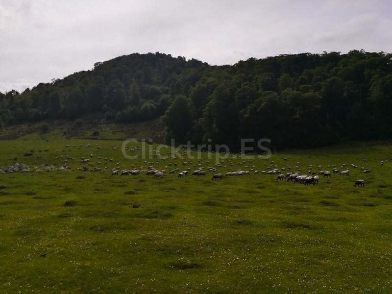 Cueva de Arpea ·Qué ver en Navarra · Rutas de senderismo de montaña - ClickTrip