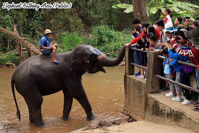 Elephant Bathing Area Maesa