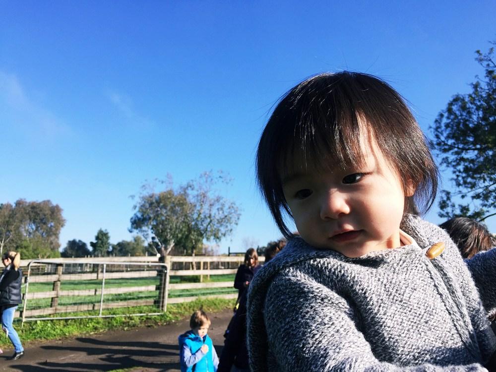 9 July 2016: Collinwood Children's Farm | Melbourne, Australia