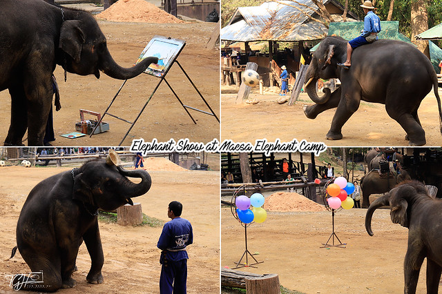 Elephant Show at Maesa Elephant Camp