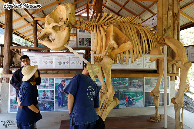 Maesa Elephant Camp Museum