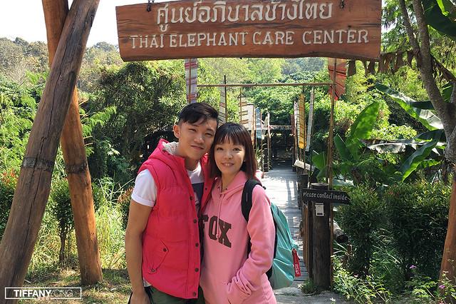 Maesa Thai Elephant Care Center